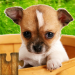 Dogs Jigsaw Puzzles Game – For Kids Adults 25.1 MOD Unlimited Money